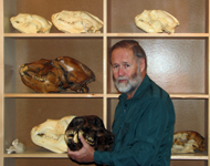 Jim Halfpenny displaying recent & fossil bear skulls
